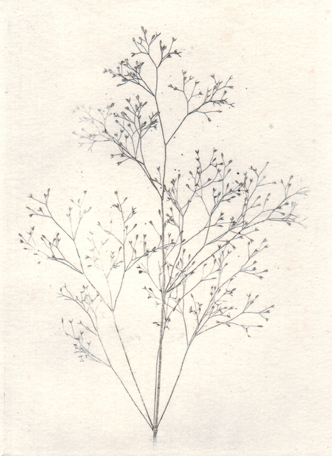 , 'Fine Grass Study (Graminée du Midi de la France),' 1852-1857, Alan Klotz Gallery