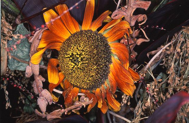 Nobuyoshi Araki, 'Flower Rondeau', 1997-2019, Michael Hoppen Gallery