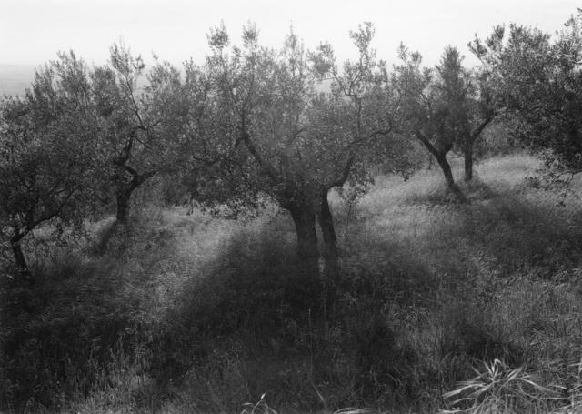 , 'Tuscan Trees #24,' 1996, Wirtz Art
