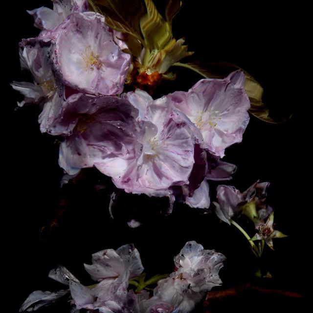 , 'Floral Study [0464],' 2012, Dellasposa