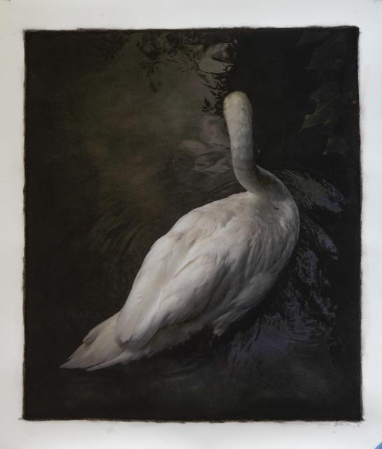 Kate Breakey, 'Swan, Tuscany, Italy', Brickworks Gallery