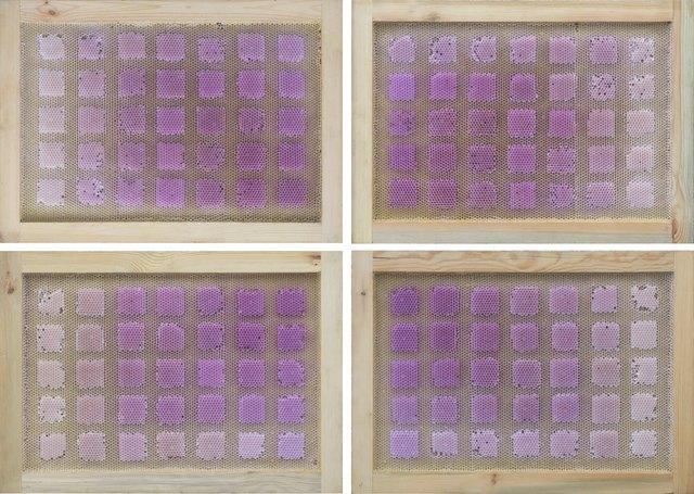 , 'Beecolour Series I-P+60E18N,' 2016, Pearl Lam Galleries