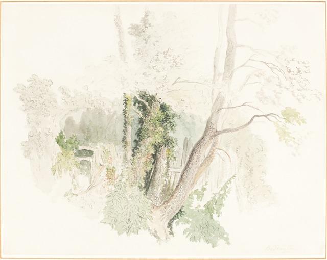 Robert Hills, 'Trees at Beddington', possibly c. 1805, National Gallery of Art, Washington, D.C.