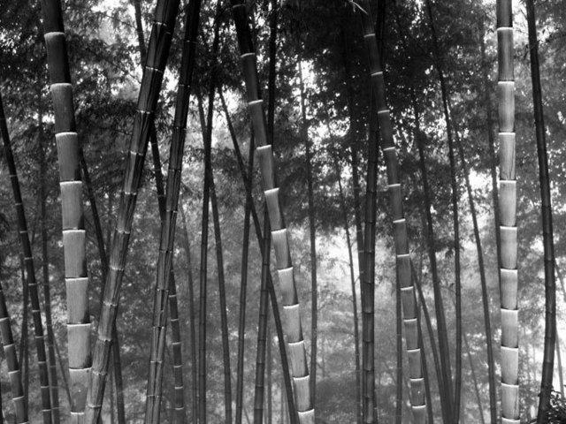 DaeSoo Kim, 'bmb2010194', 2010, Photography, Gelatin silver print, Gallery BK