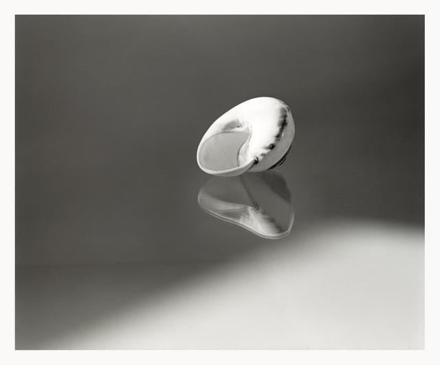 , 'The Still Life with Mussel,' 1999, see+ Gallery