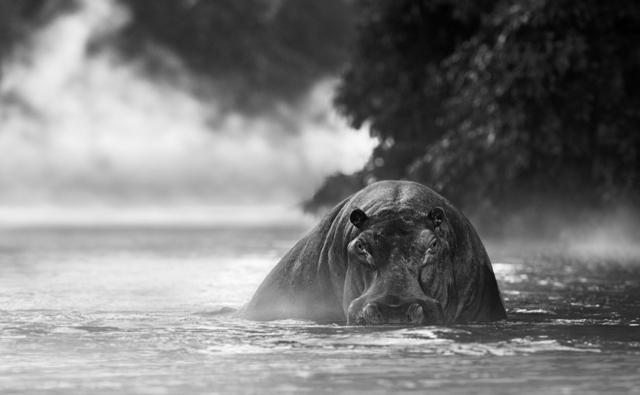 David Yarrow, 'The River Monster', 2018, Photography, Archival Pigment Print, Hilton Asmus