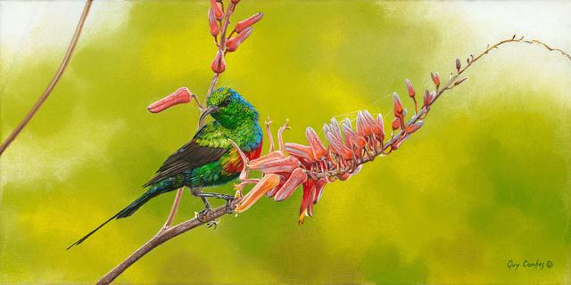 , 'Old-World-Jewel (Sunbird),' , Trailside Galleries