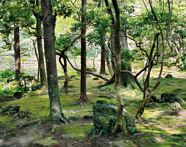 , 'Saihō-ji 10, summer Southwest Kyoto 30 May 2009 (13:00–15:00),' 2009, Benrubi Gallery