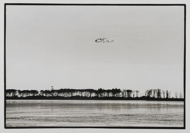 Yoho Tsuda, 'Migratory Birds', MEM