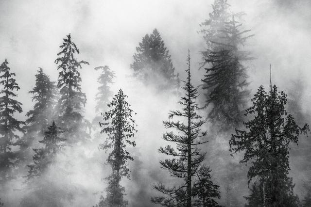 , 'Foggy Trees,' , Paul Nicklen Gallery