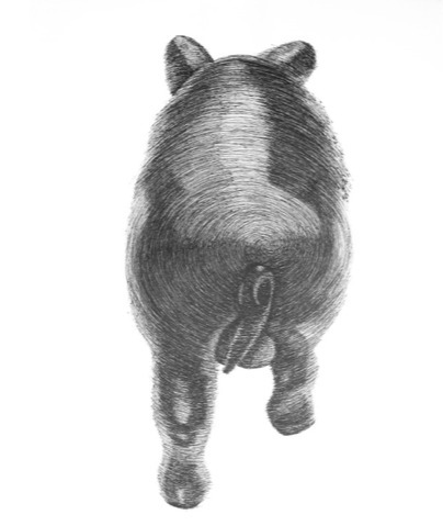 , 'Cerdo Espiral (lomo),' 2014, Nube Gallery