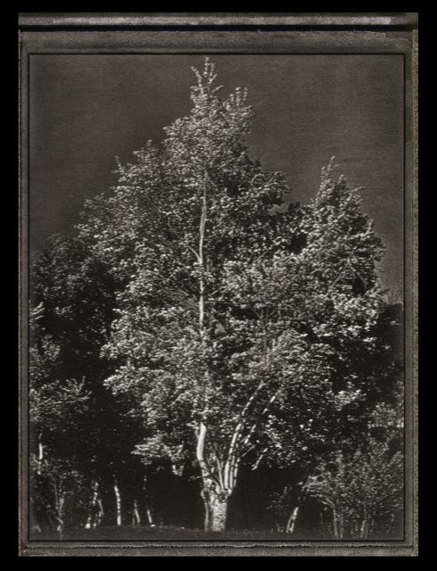 , 'Tree,' 1978, CHRISTOPHE GUYE GALERIE