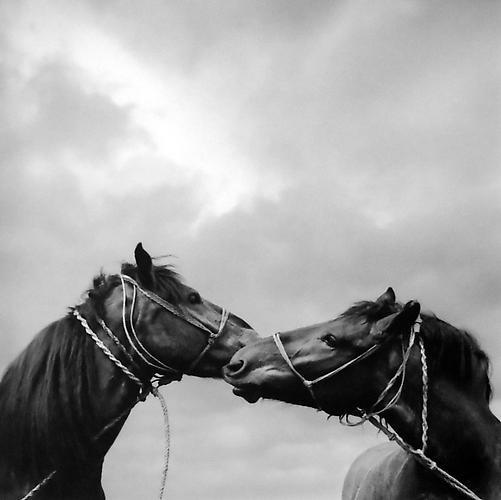 , 'Untitled (Horse Kiss),' 1979, Peter Fetterman Gallery