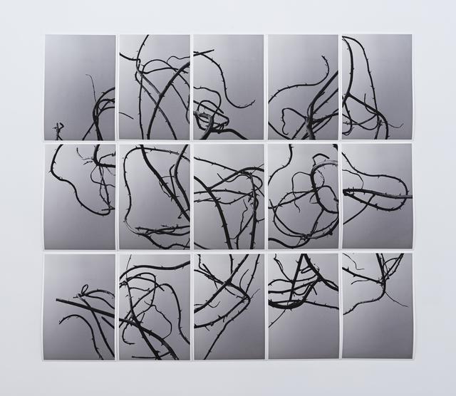 Martin Soto Climent, 'Sendero de espinas', 2018, PROYECTOSMONCLOVA