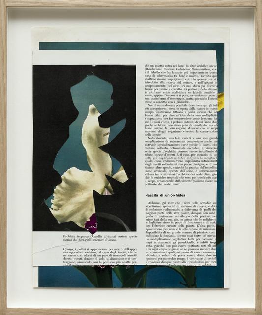 Alessandra Spranzi, 'Fiori #6 (Nascita di un'Orchidea)', 2016, P420