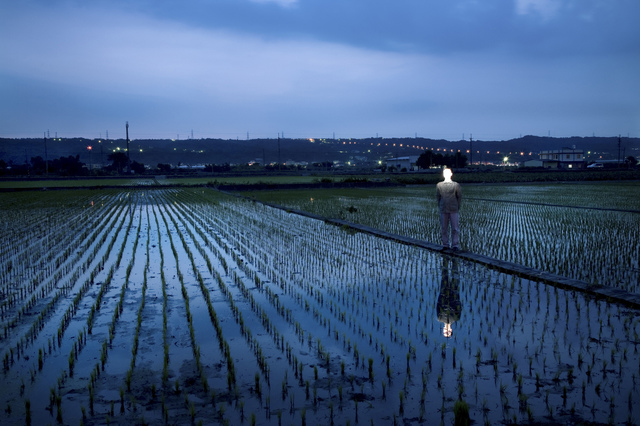, 'Rice Field,' 2007, POCKET FINE ARTS