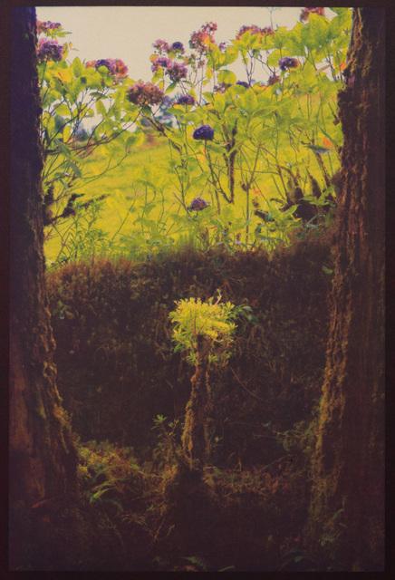 , 'Natural Still Life,' , Soho Photo Gallery