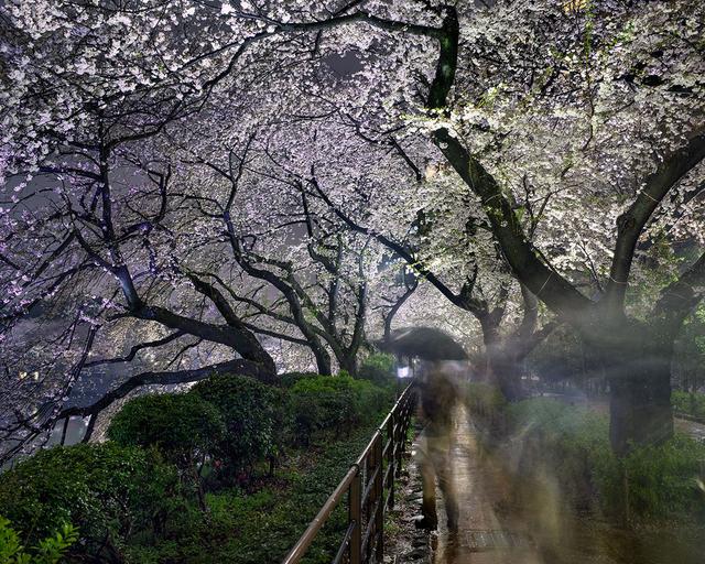 , 'Hanami #15, Chidorigafuchi, Thursday April 3rd (TV14615),' 2014, Jackson Fine Art