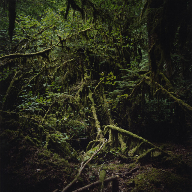 , 'Quinault (Interior #2),' 2014, Sears-Peyton Gallery