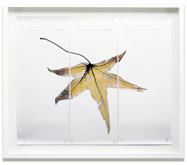 , 'Black Pulse #4,' 2002-2003, HackelBury Fine Art