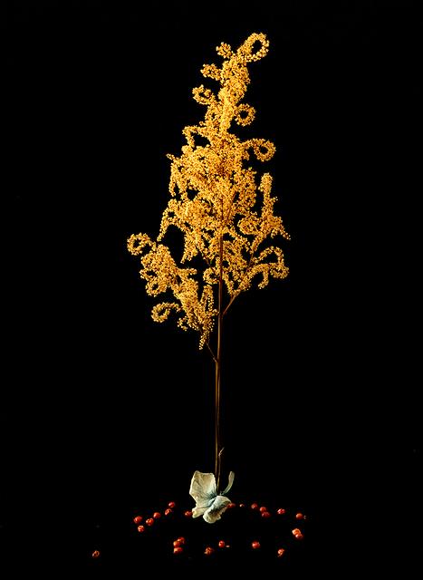 , 'Ur Namnlösa växter mot svart, 4  ,' 2000, CFHILL
