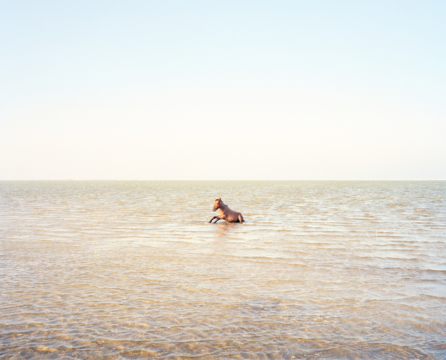 Vasantha Yogananthan, 'The Horse From The Sea', 2018, Photography, Archival Inkjet print on Canson print making Rag 310gsm paper, The Photographers' Gallery | Print Sales