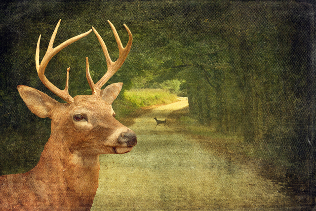 , 'Deer Crossing,' ca. 2018, Brickworks Gallery