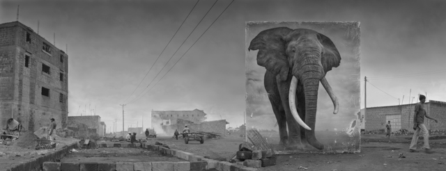 Nick Brandt, 'Road with Elephant ', 2014, Fahey/Klein Gallery