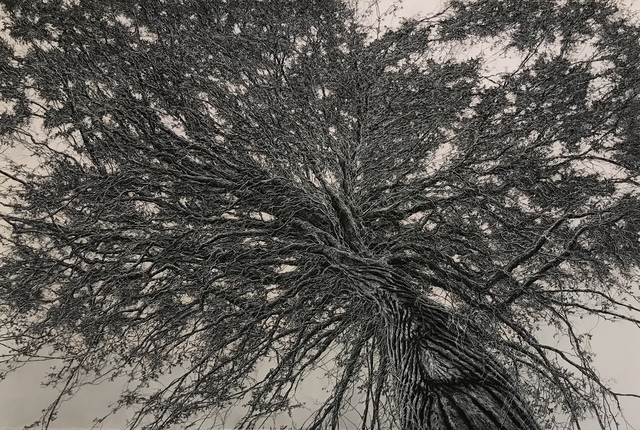 , 'Through the Canopy 1,' 2018, Olson Larsen Gallery