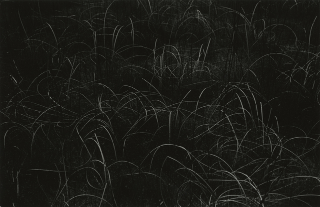 , 'Grasses, Wisconsin,' 1959, Pace/MacGill Gallery