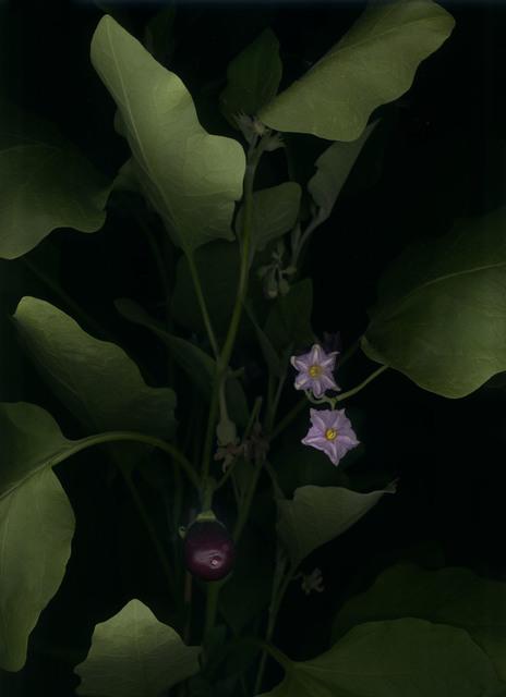 , 'Aubergine (Solanum melongena),' 2018, Galerie Judith Andreae