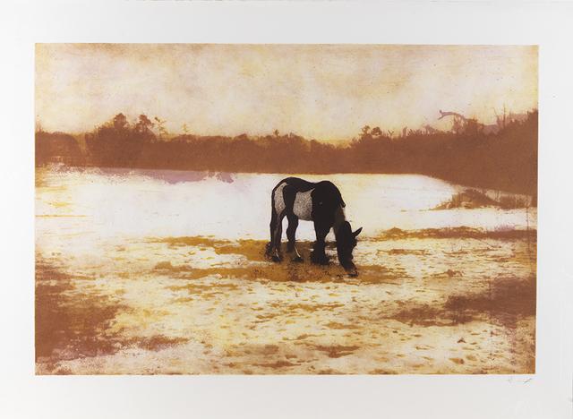 , 'Pinto,' 2000-2001, Lyndsey Ingram