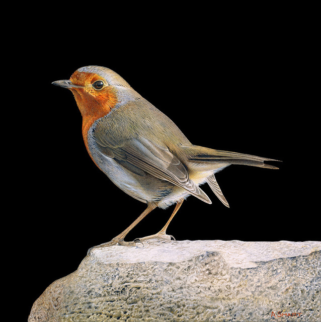 Adrian Smart, 'Robin on Rock', Drawing, Collage or other Work on Paper, Watercolour on board, Plus One Gallery