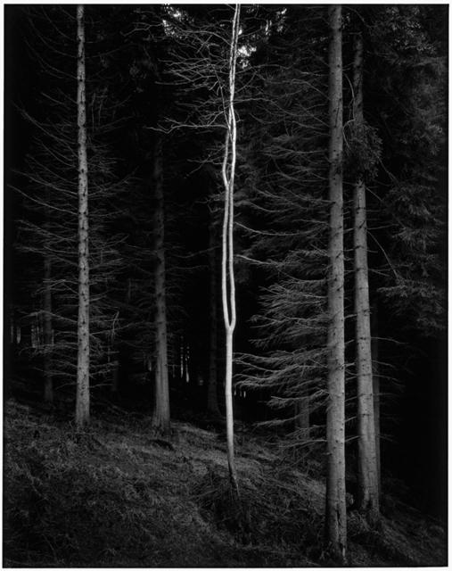 , 'Alien,' 2007, The Photographers' Gallery