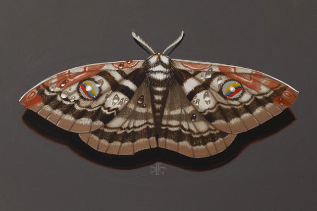 , 'Moth 1,' 2018, Haven Gallery