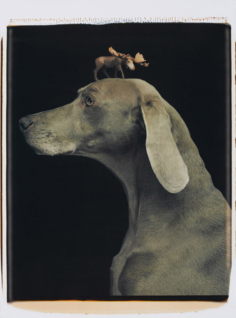 , 'Moosehead,' 1994, Senior & Shopmaker Gallery