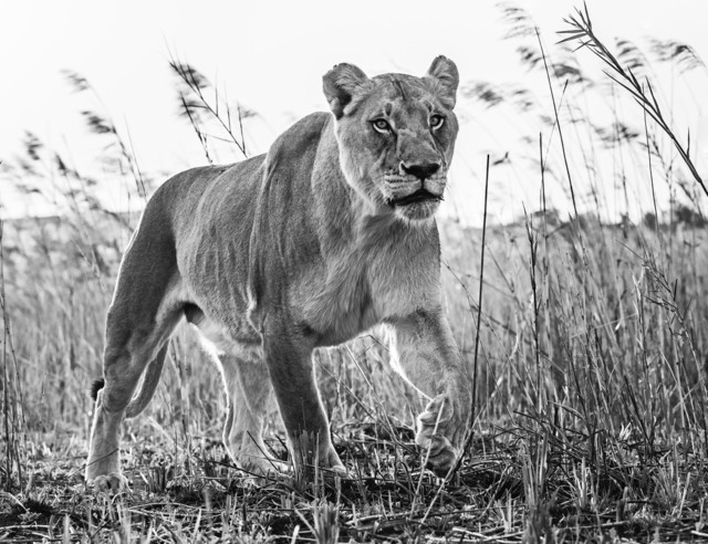 David Yarrow, 'The Green Green Grass of Home', 2016, Isabella Garrucho Fine Art