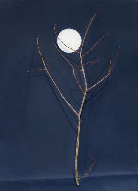 , 'Tree with Cut-out Moon,' 2016, Purdy Hicks Gallery