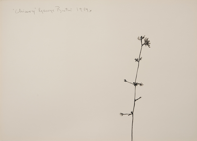 , 'Chicory,' 1989, Imlay Gallery