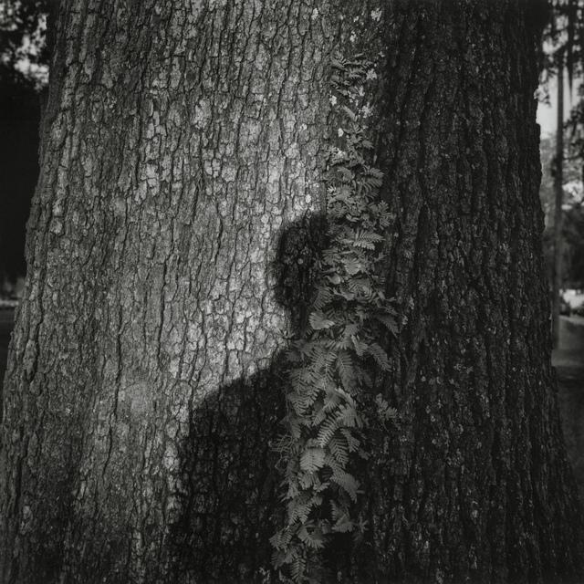 , '情緒地景-影子 Seeing and Construction-Shadow,' 1999, POCKET FINE ARTS