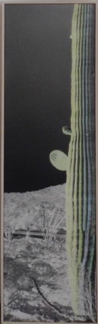 Bob Wade, 'Night Cactus', 2017, William Campbell Contemporary Art, Inc.