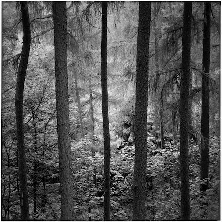 Paul Hart, 'Shroud', 2004, The Photographers' Gallery | Print Sales