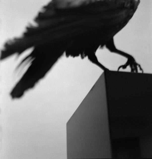 """, '""""Monologo con un cuervo"""" ,' 2011, Galería Juana de Aizpuru"""