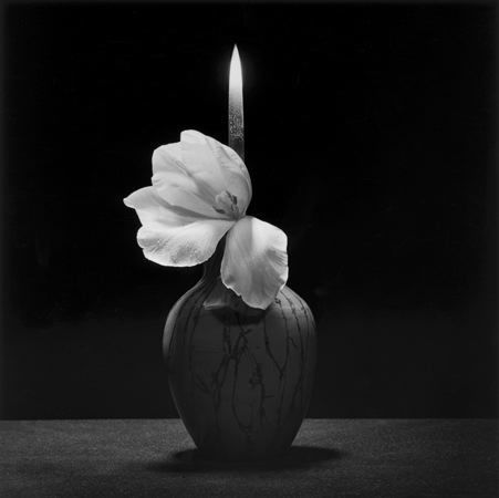 , 'Flower with Knife,' 1985, Galerie Thaddaeus Ropac