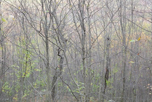 , 'Layers #8 Harriman State Park,' 2016, Soho Photo Gallery