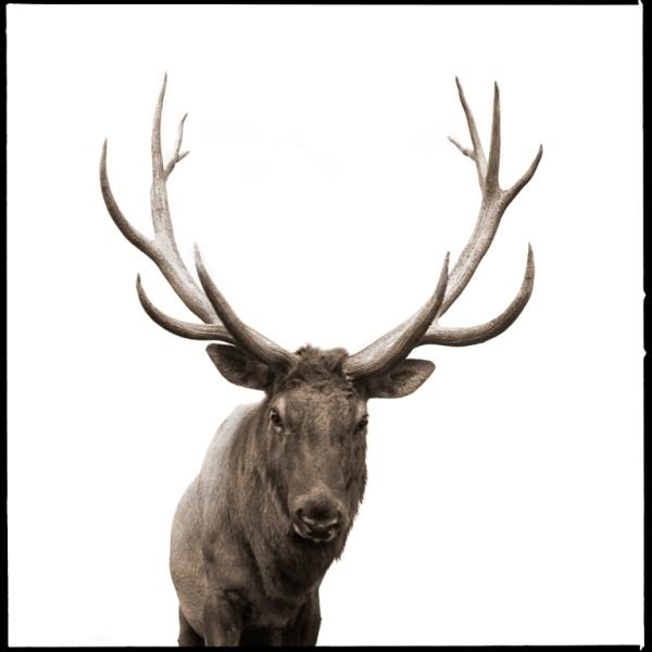, 'Elk I,' 2017, Julie Nester Gallery