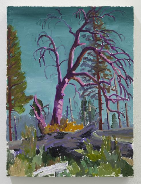 , 'Burnt Forest (Yosemite),' 2019, 1969 Gallery