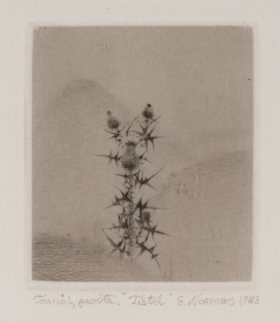 , 'Tistel (Thistle),' , Pucker Gallery
