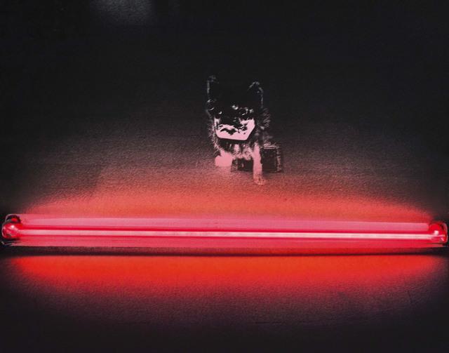 """Silvia Lelli, 'Neon collection / Neon installation, M.P, T.I. n° 2/2, Maniac Production, """"Tragico intervallo n.2"""" Bologna, Galleria d'Arte Moderna, 1978', 1978,  29 ARTS IN PROGRESS gallery"""
