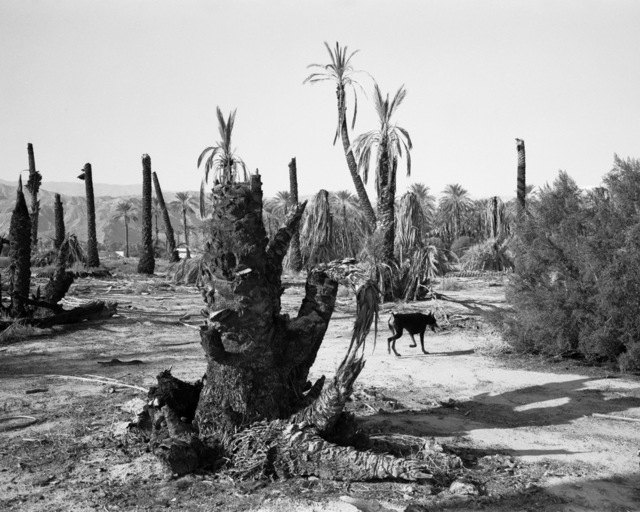 , 'Palm Desert,' 1987, Jenkins Johnson Gallery